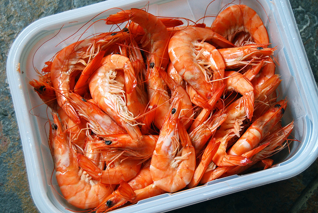 how to catch spotted prawns